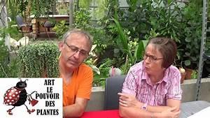 Bouture Plante Verte : tuto jardinage senecio rowleyanus comment faire une bouture plantes vertes succulente ~ Melissatoandfro.com Idées de Décoration