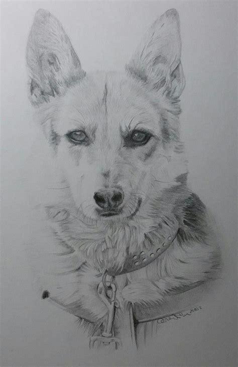 bild hund portrait zeichnung zeichnungen von carmen
