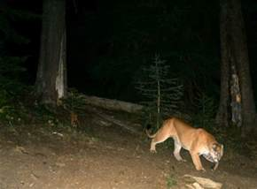 People On Trail Cam