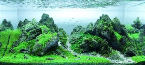 Amano Aquascaping by Aquascaping Your Aquarium Look Awesome