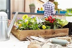 Balkonblumen Richtig Pflanzen : balkonblumen tipps zur pflanzung und pflege herold ratgeber ~ Frokenaadalensverden.com Haus und Dekorationen
