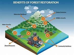 Investors can calm western wildfires | GreenBiz
