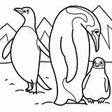 Coloring Penguins Pages Penguin Animal Print sketch template