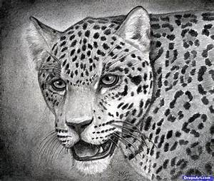 How To Draw A Realistic Jaguar Step By Step Realistic