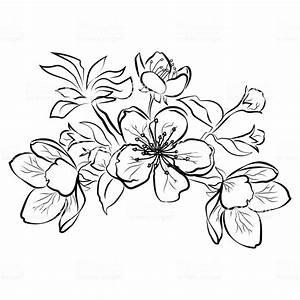 Dessin Fleur De Cerisier Japonais Noir Et Blanc : fleurs de cerisier branche de sakura avec boutons floraux ~ Melissatoandfro.com Idées de Décoration