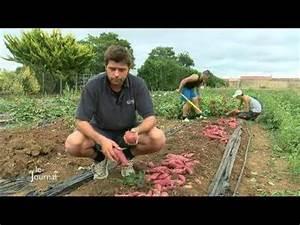 Culture De La Patate Douce : exp rimentation de la culture de patate douce vix youtube ~ Carolinahurricanesstore.com Idées de Décoration