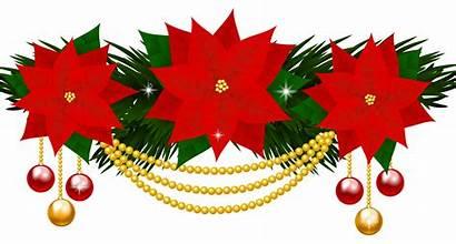 Clipart Poinsettias Poinsettia Decoration Christmas Flower Clip
