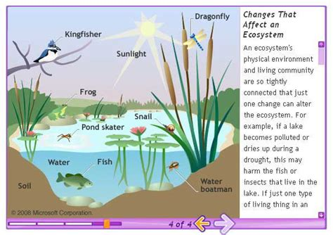 Ecosystem Diagram  Ecosystemjpg  Ecosystems (systems