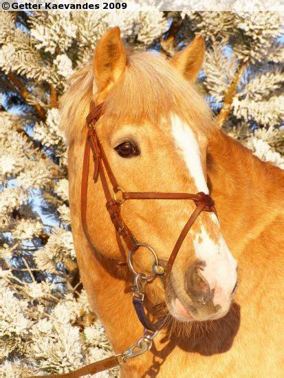 horse sukuposti horses