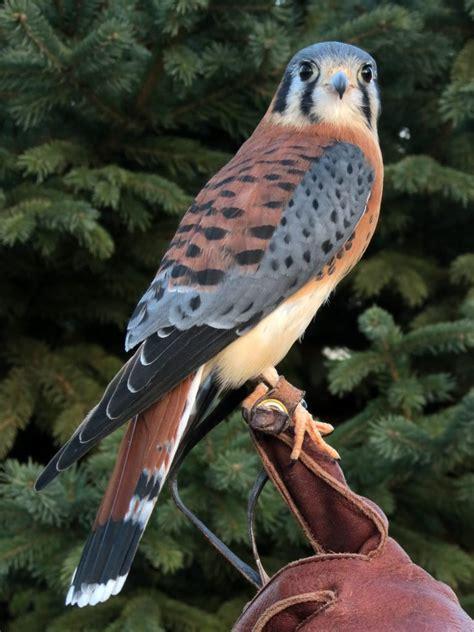 birds  prey  display wings talons hoffman