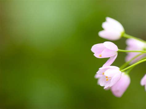 wallpaper flower blur background hd widescreen high