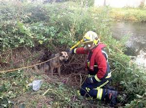 firefighters spend  hours   rescue german