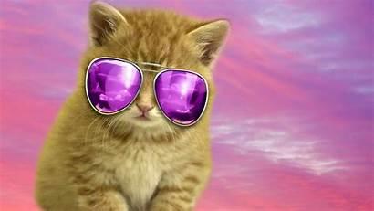 Cat Cool Wallpapers Backgrounds Luna Resolution Desktop