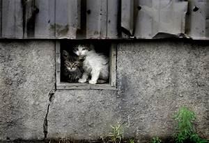 Homeless Cats | cute animals | Pinterest