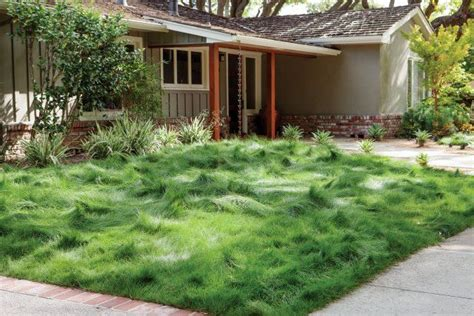 alternatives to grass in backyard lawn alternatives pergolakitsusa 7429