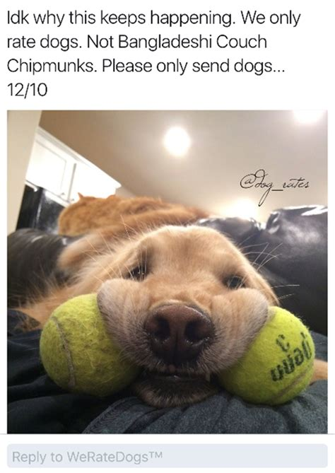 rate dogs  hilarious  pics