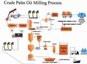 What Is The Detail Process Of Palm Oil Refinery