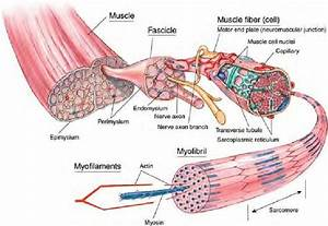 202 Best Anatomy  U0026 Physiology  Diagrams  U0026 Study Resources