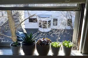 Zimmerpflanzen Alte Sorten : sukkulenten als zimmerpflanzen halten so pflegen sie sie ~ Michelbontemps.com Haus und Dekorationen