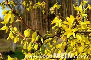 Paprika Pflanzen Abstand : naturkalender fr hling bewusst mein ~ Whattoseeinmadrid.com Haus und Dekorationen