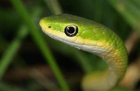 snakes hear ssssounds