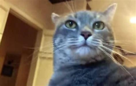 cat   presidential speech  ebola video