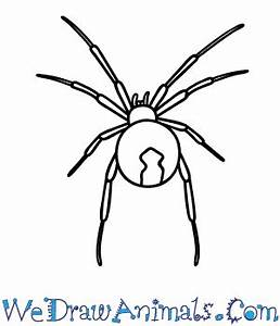 How to Draw a Black Widow Spider