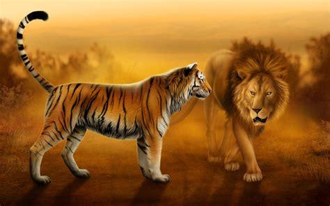desktop hd lion  tiger pics wallpaperscom