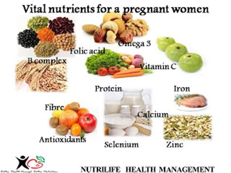 nutrition  simple terms life cycle nutrition