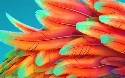 Rainbow Background Pattern Bird 4k Desktop Papers