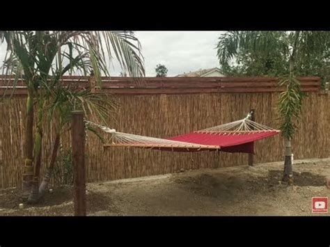 Hammock Posts Diy by Kiwi Vines Banana Tree Update Diy Hammock Posts