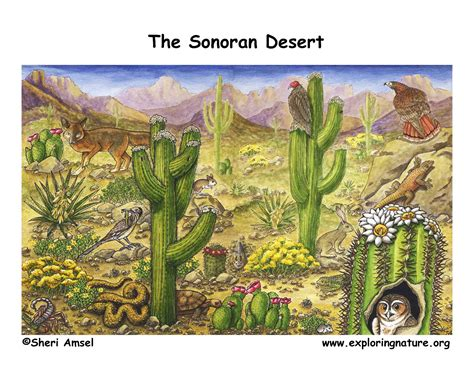 deserts  north america sonoran
