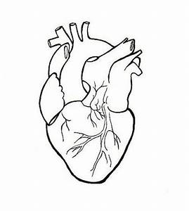Human Heart Clipart Drawing - ClipartXtras
