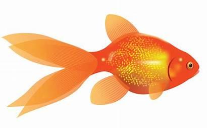 Goldfish Clipart Clip Dorothy Clipartion