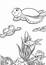 Turtle Coloring Sea Pages Fox sketch template
