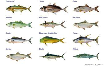 names  fish  eat     eat  types