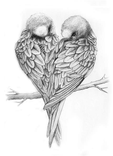 love birds drawings  pencil drawings art gallery