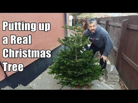 how to put up a real christmas tree setting up a