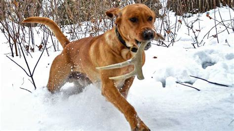 shed dogs utah 15 shed dogs that you will want to own hawaii