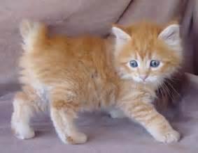 cat for free cat animal wildlife