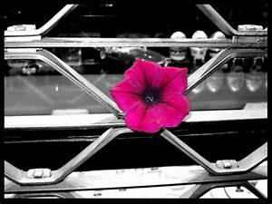 Schwarz Weiß Bilder Mit Farbe Städte : farbe in schwarz wei hoffnung am gitter foto bild emotionen leise youth bilder auf ~ Orissabook.com Haus und Dekorationen
