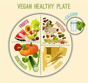 Food Plate Guide Stock Vector  Illustration Of Group