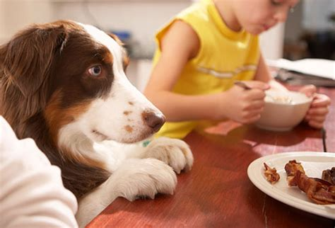 table food for dogs 7 kind of schools