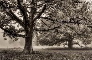 Herbst Schwarz Weiß : b ume im nebel forum f r naturfotografen ~ Orissabook.com Haus und Dekorationen