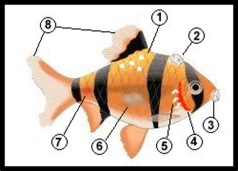 animaquarios quando  peixe ficar doente  aquario