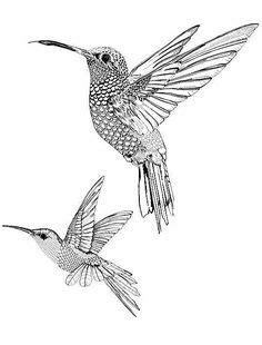 color book humming birds | Hummingbird Coloring Page | Color a Humming Bird | Crafts | Coloring