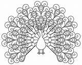 Coloring Peacocks Simple Children Printable sketch template