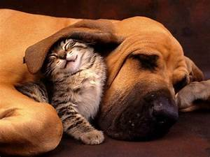 Top 10 cutest puppy and kitten pals Cute n Tiny