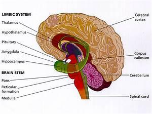 Psych 202 Study Guide  2014-15 Coffey