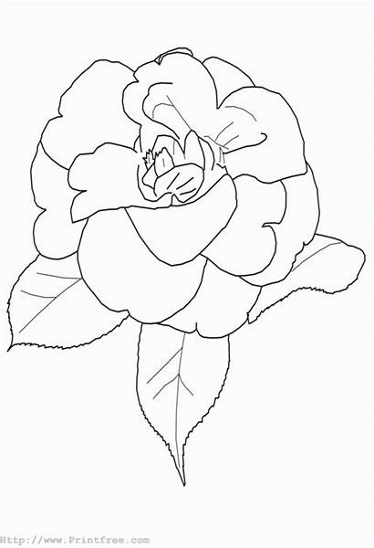 Flower Line Shape Coloring Pages Outline Flowers